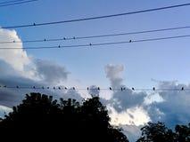 Pájaros en línea Fotos de archivo