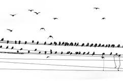 Pájaros en línea eléctrica Imagen de archivo libre de regalías
