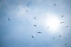 Pájaros en la caza del cielo para los pescados Fotografía de archivo libre de regalías