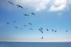 Pájaros en la formación a través del cielo sobre el océano Foto de archivo libre de regalías