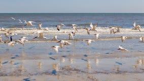 Pájaros en la isla del Cumberland Imágenes de archivo libres de regalías