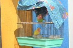 Pájaros en la jaula Foto de archivo libre de regalías