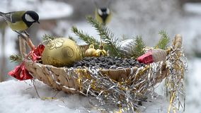 Pájaros en la Navidad almacen de video
