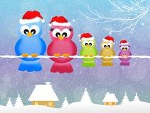 Pájaros en la Navidad Fotos de archivo