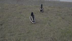 Pájaros en la orilla del río congelado almacen de video