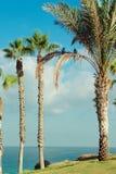 Pájaros en la palmera Imágenes de archivo libres de regalías