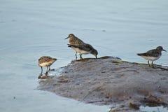 Pájaros en la playa foto de archivo