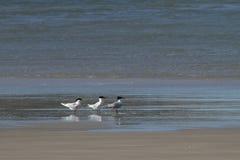 Pájaros en la playa Imágenes de archivo libres de regalías