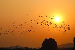 Pájaros en la puesta del sol Imágenes de archivo libres de regalías