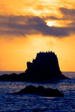 Pájaros en la puesta del sol foto de archivo libre de regalías