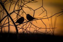 Pájaros en la puesta del sol Fotos de archivo libres de regalías