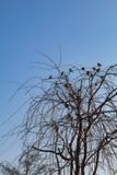 Pájaros en la rama de un árbol Imagen de archivo libre de regalías