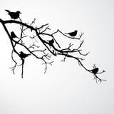 Pájaros en la ramificación stock de ilustración