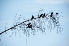 Pájaros en la ramificación Fotos de archivo libres de regalías