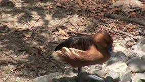 Pájaros en las islas de las Islas Galápagos metrajes