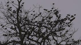 Pájaros en las ramas de roble, cielo nublado del invierno, cierre fijado trípode de la cámara para arriba