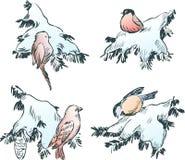 Pájaros en las ramificaciones Fotografía de archivo