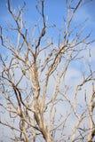 Pájaros en las ramitas secadas con el cielo azul Imagen de archivo