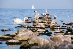 Pájaros en las rocas Fotos de archivo