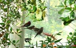 Pájaros en Lincoln Park, Chicago imagen de archivo libre de regalías