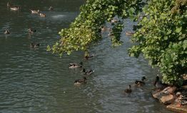 Pájaros en Lincoln Park, Chicago imagenes de archivo