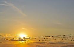 Pájaros en los alambres Fotos de archivo