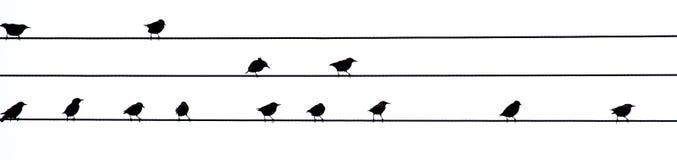 Pájaros en los alambres Imágenes de archivo libres de regalías