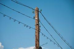 Pájaros en los alambres Imagen de archivo libre de regalías