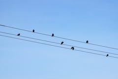 Pájaros en los alambres contra el cielo azul imagen de archivo