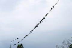 Pájaros en los alambres eléctricos Fotografía de archivo libre de regalías
