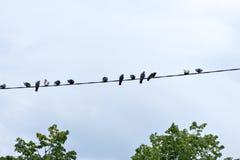 Pájaros en los alambres eléctricos Fotos de archivo