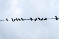 Pájaros en los alambres eléctricos Foto de archivo libre de regalías