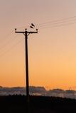 Pájaros en los alambres en la puesta del sol Imagen de archivo libre de regalías