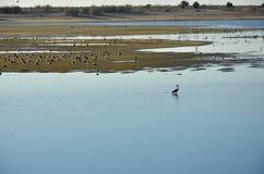 Pájaros en los riverbanks del Duero en la puesta del sol Imagenes de archivo