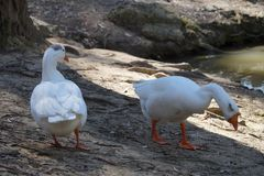 Pájaros en naturaleza imagen de archivo libre de regalías