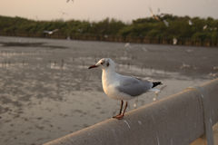 Pájaros en paraíso Imágenes de archivo libres de regalías