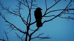 Pájaros en rama y el volar apagado por la tarde