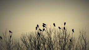 Pájaros en ramas Fotografía de archivo