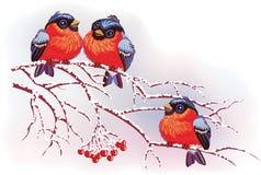 Pájaros en ramificaciones Fotografía de archivo