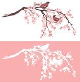Pájaros en sistema floreciente del diseño del vector del árbol de Sakura Fotografía de archivo