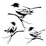 Pájaros en sistema negro del vector de las ramas de árbol Fotografía de archivo libre de regalías