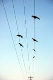 Pájaros en torre eléctrica Fotos de archivo