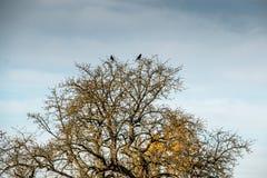 Pájaros en un árbol Fotos de archivo libres de regalías