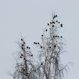 Pájaros en un árbol Imagen de archivo