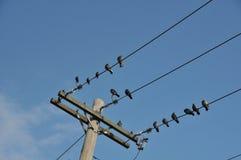 Pájaros en un alambre Fotografía de archivo