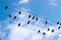 Pájaros en un alambre Fotos de archivo libres de regalías