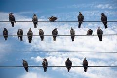 Pájaros en un alambre. Imágenes de archivo libres de regalías