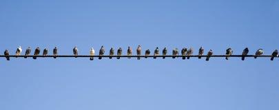 Pájaros en un alambre Imágenes de archivo libres de regalías