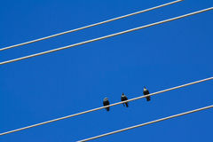 Pájaros en un alambre Imagen de archivo libre de regalías