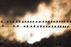 Pájaros en un alambre Fotos de archivo